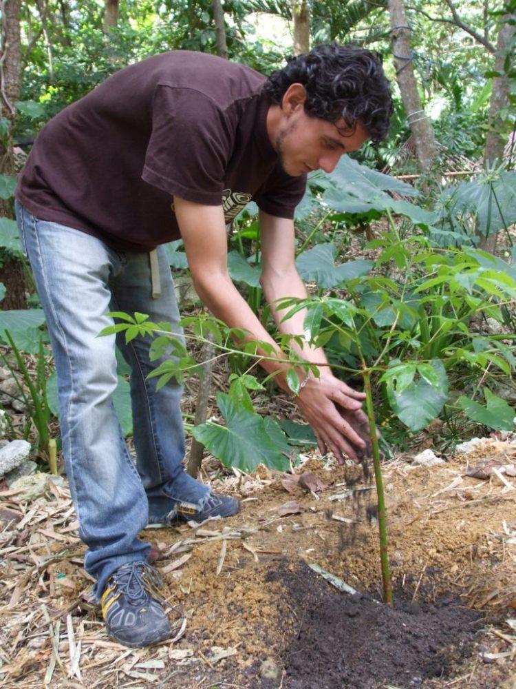 Proyecto El Caimán Verde  (3/3)